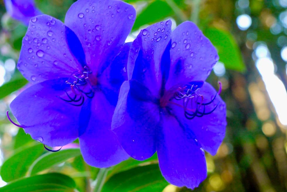 Lake Mangamahoe - Blumen - Nordinsel Neuseeland