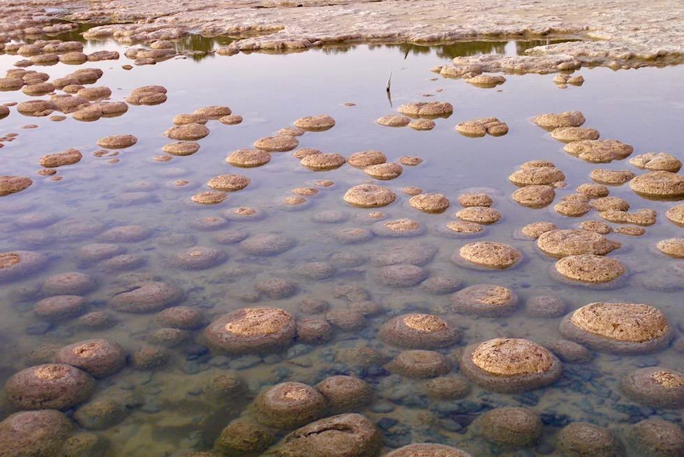 Milliarden alte Lebende Steine - Thromboliten am Lake Clifton - Western Australia