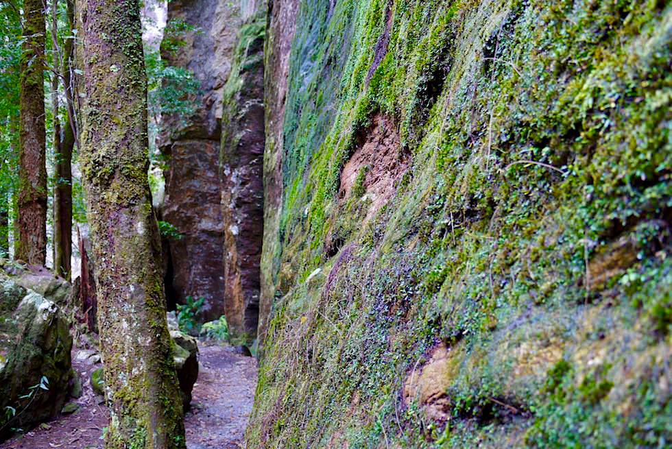 Faszinierende Felsen, Moos, Farben - Twin Falls Wanderung - Springbrook National Park - Queensland