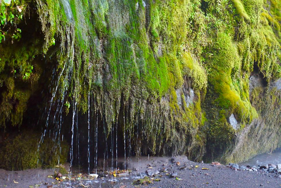 Leuchtendes Moos in 50 Grüntönen & tropfendes Wasser an den Wänden der Dawson Falls im Egmont National Park - Nordinsel Neuseeland