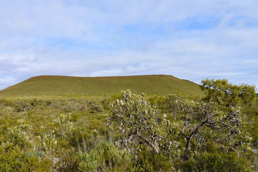 Blick auf Mount Michaud - Lesueur National Park - Western Australia