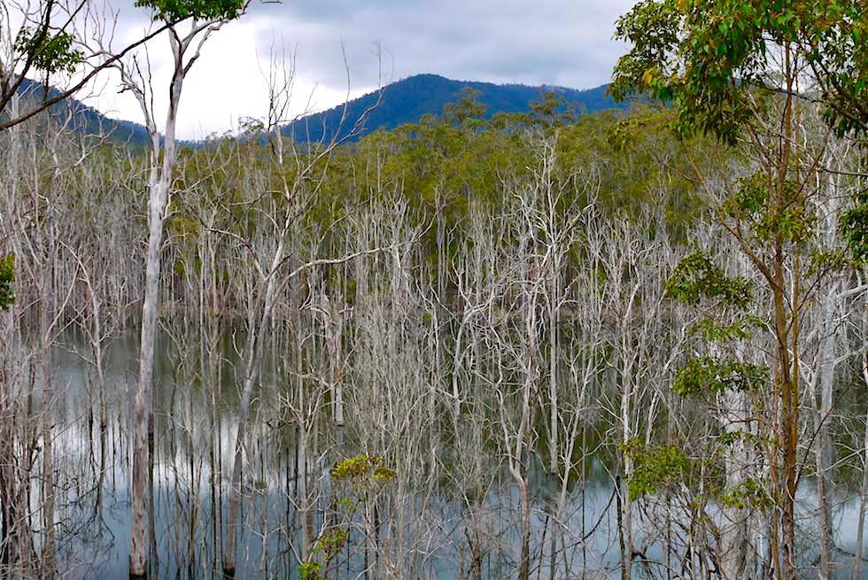 Goldcoast Hinterland: Numinbah Valley - Ausblick auf Advancetown Lake - Queensland