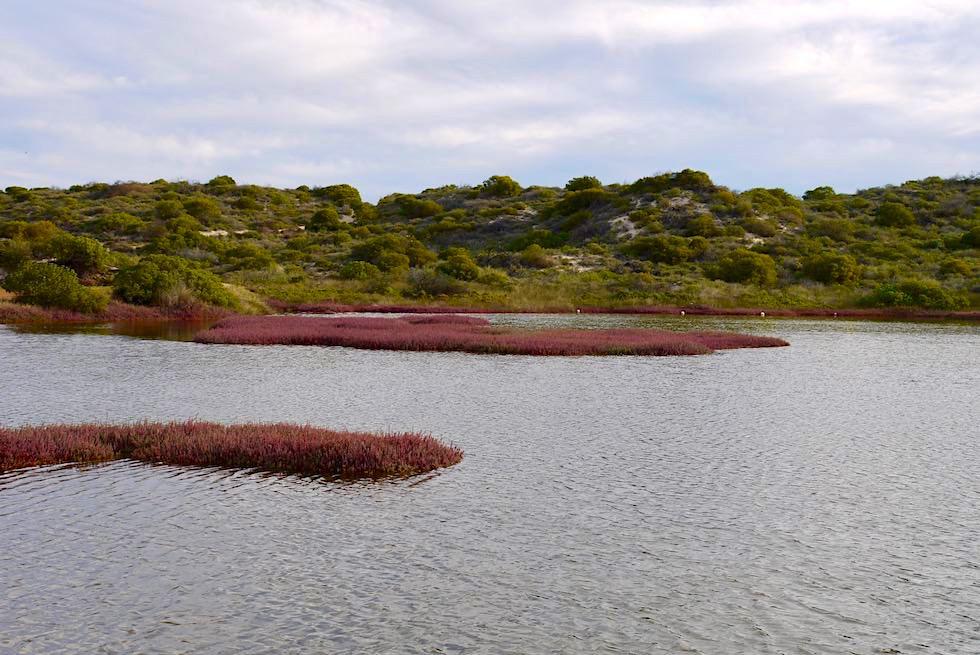Port Gregory - Hutt Lagoon - Western Australia