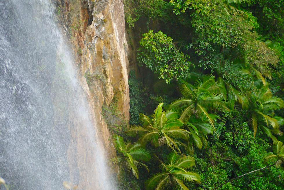 Purling Brook Falls, Baumfarne & Gondwana Rainforest - Springbrook National Park - Queensland