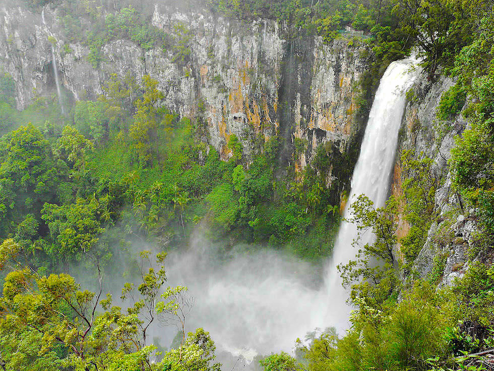 Purling Brook Falls mit viel Wasser - Springbrook Plateau & Springbrook National Park - Queensland