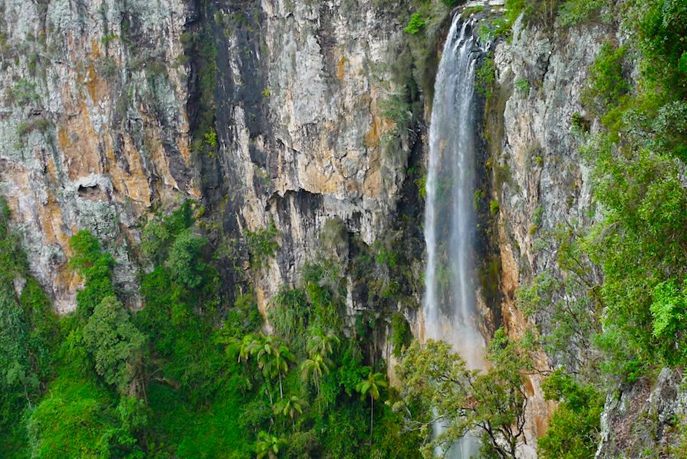 Grandiose Purling Brook Falls vom Lookout gesehen - Springbrook Plateau & Springbrook National Park - Queensland