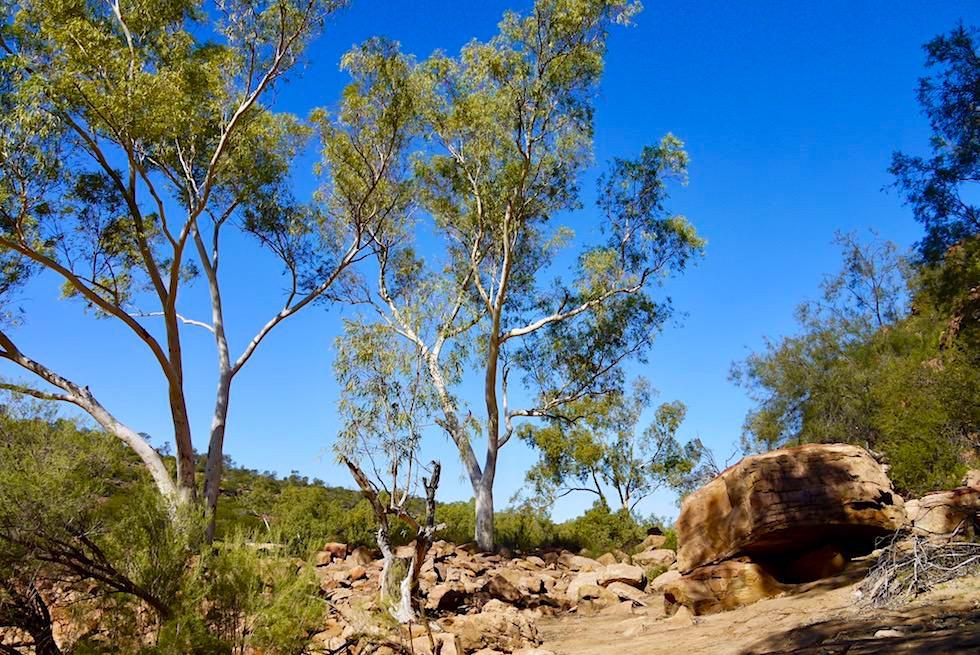 Sandiger Pfad zum Murchison River auf Ross Graham Walk - Kalbarri National Park - Western Australia
