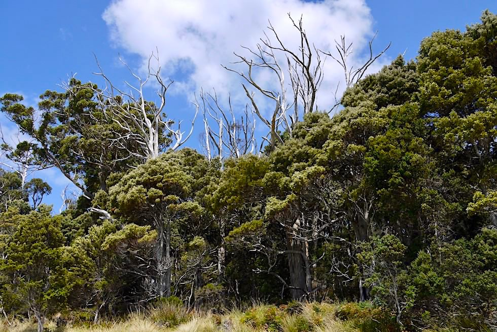 South Cape Walk - Cockle Creek - Tasmania