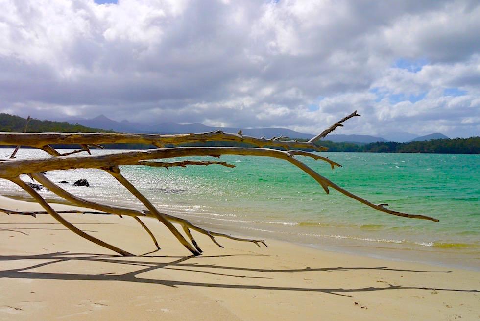Hölzerne Gottesanbeterin - Strandspaziergang am Ende Australiens - Cockle Creek - Tasmania