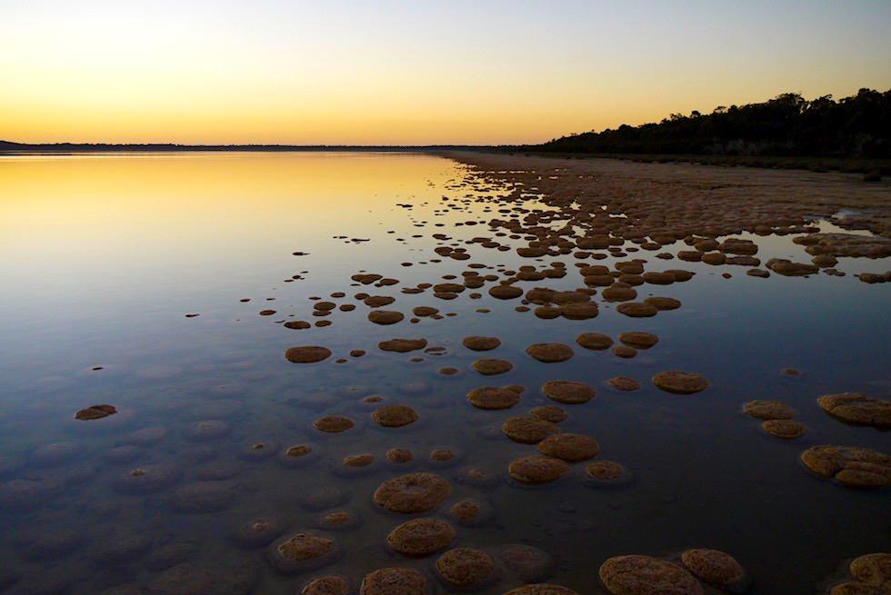 Thromboliten in der untergehenden Sonne am Lake Clifton - südlich von Perth - Western Australia