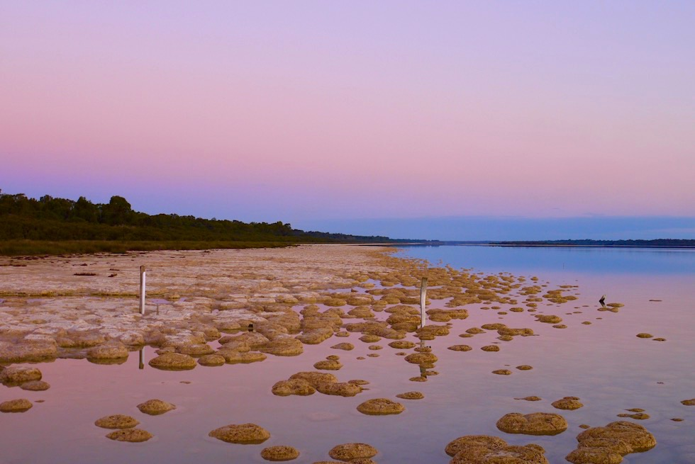 Thrombolithen & atemberaubend schöner Sonnenuntergang am Lake Clifton - - Western Australia