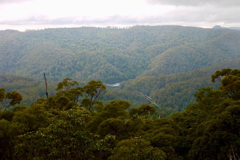 Ausblick vom Wunburra Lookout - Springbrook Plateau & Springbrook National Park - Queensland