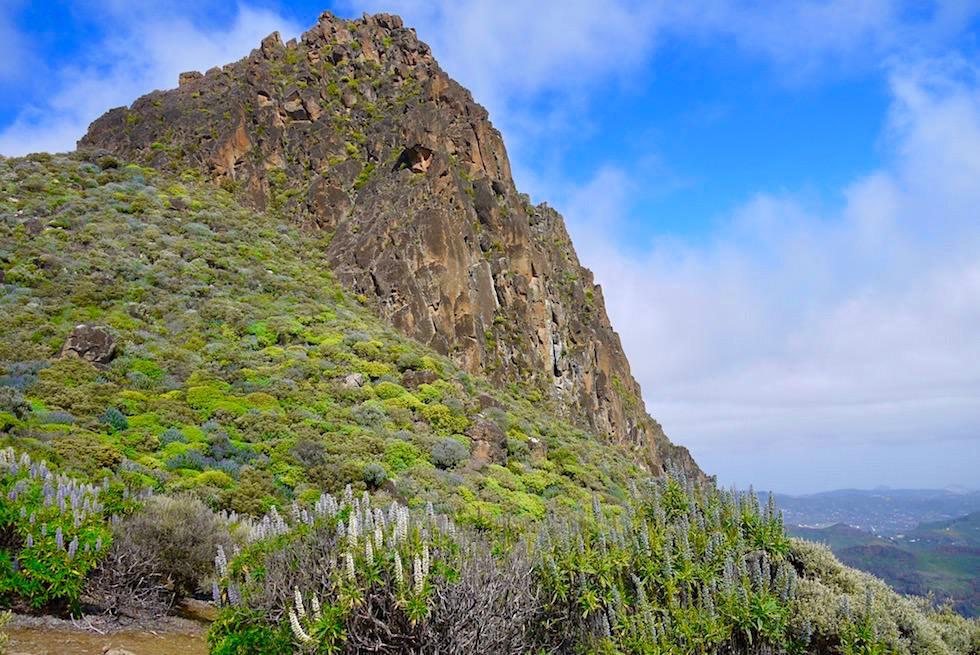 Roque Grande Wanderung - Leuchtende Blumenhänge - Valsequillo - Gran Canaria
