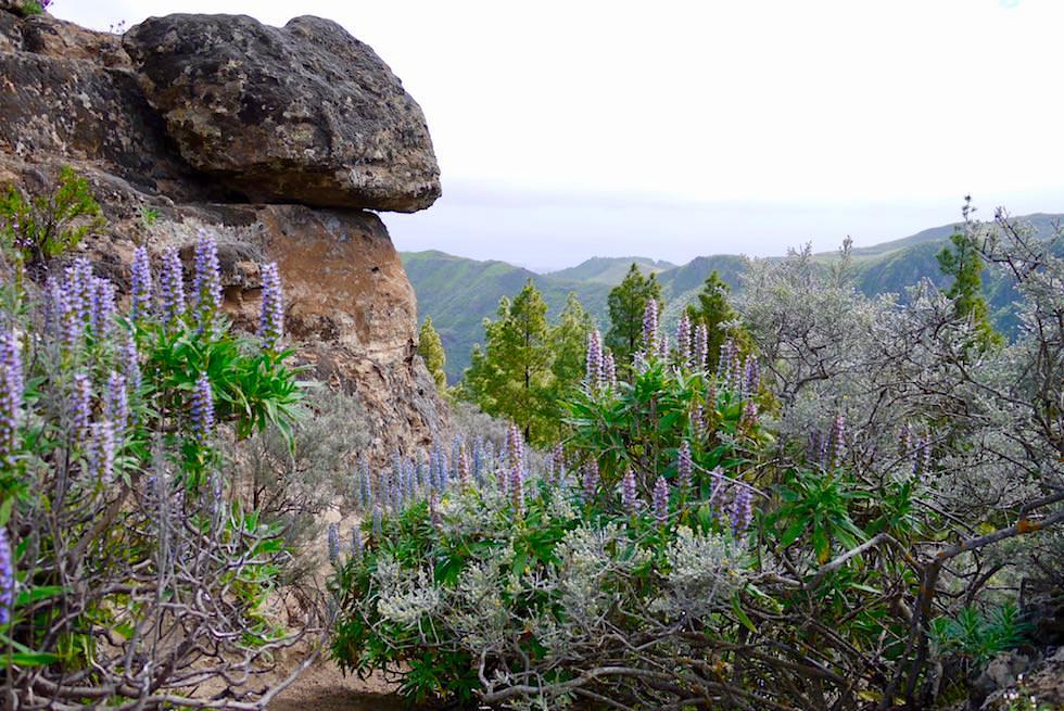 Roque Grande Wanderung - großartige Ausblicke - Valsequillo - Gran Canaria