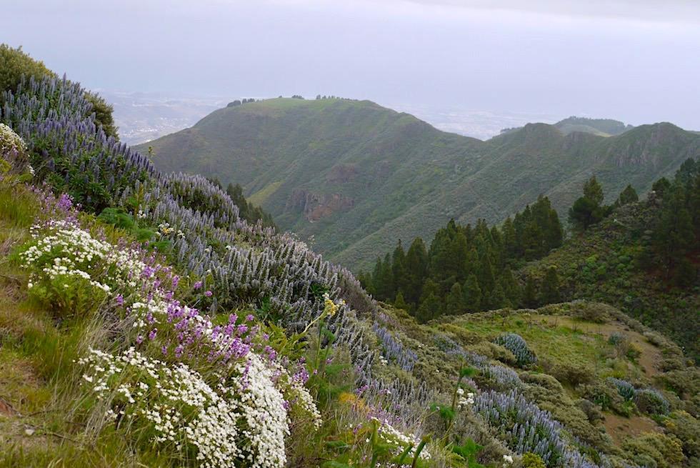Blütenwunder: Roque Grande Wanderung Route 10 - blühender Berghang - Valsequillo - Gran Canaria