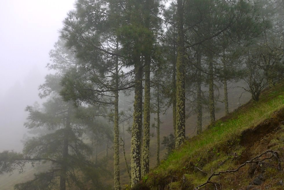Roque Grande Wanderung - Nebel - Valsequillo - Gran Ganaria
