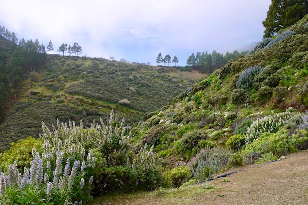 Roque Grande Wanderung - Blick zurück zum Pfad zu Beginn der Route 1 - Valsequillo - Grand Canaria