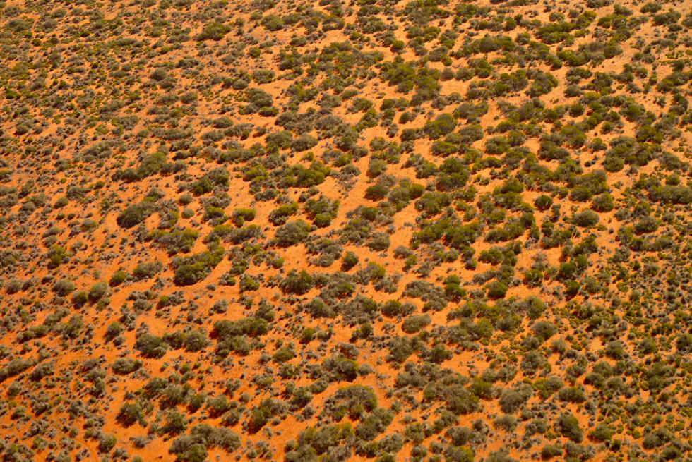 Shark Bay - Wüste & Buschlandschaft - Western Australia