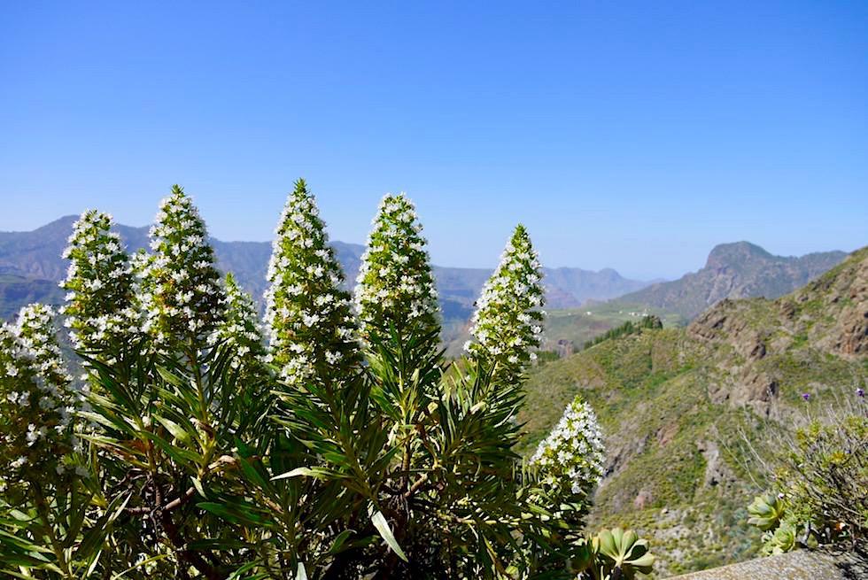Artenara - Faszinierend schöner Ausblick vom Mirador La Cilla - Gran Canaria
