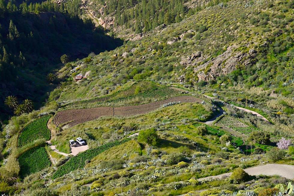Die meisten Menschen in Artenara leben von Feldern & Land- und Viehwirtschaft - Gran Canaria