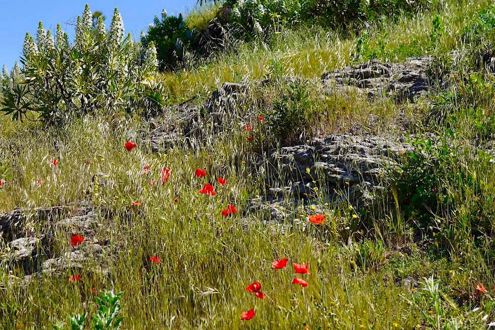 Artenara - Herrliche Frühlingswiese führen hinauf auf den Berg La Cilla - Gran Canaria