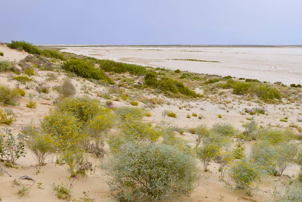 Ausblick Lake Eyre North - Level Post Bay - South Australia