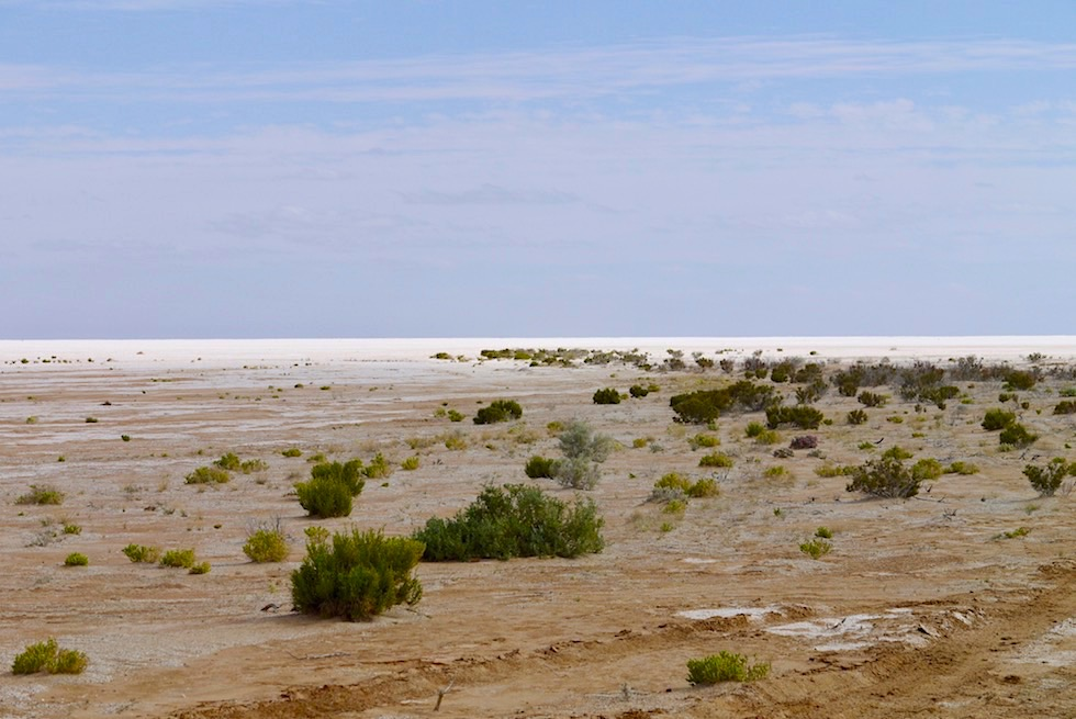 Lake Eyre South - Ufer mit Grasbüscheln - South Australia