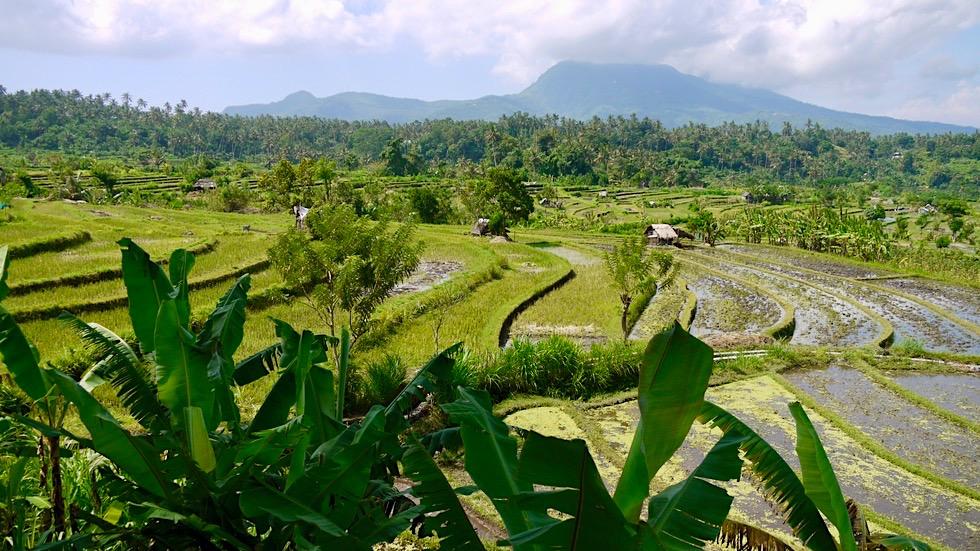 Reisterrassen Bali: Tirtaganggas Reisterrassen & Vulkan Gunung Seraya im Hintergrund - Indonesien