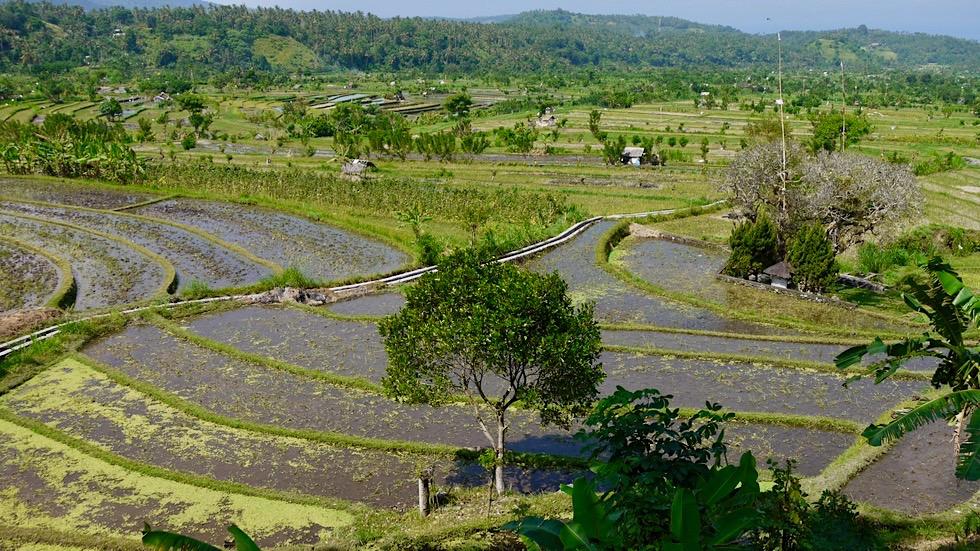 Reisterrassen Bali: Weiter Ausblick über Tirtaganggas geflutete Reisterrassen - Indonesien