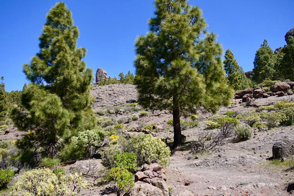Roque Nublo Wanderung - Erster Blick auf Wolkenfels - Gran Canaria