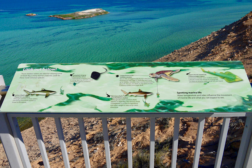 Shark Bay - Ausblick Eagle Bluff & Meeresbewohner-Schautafel - Western Australia