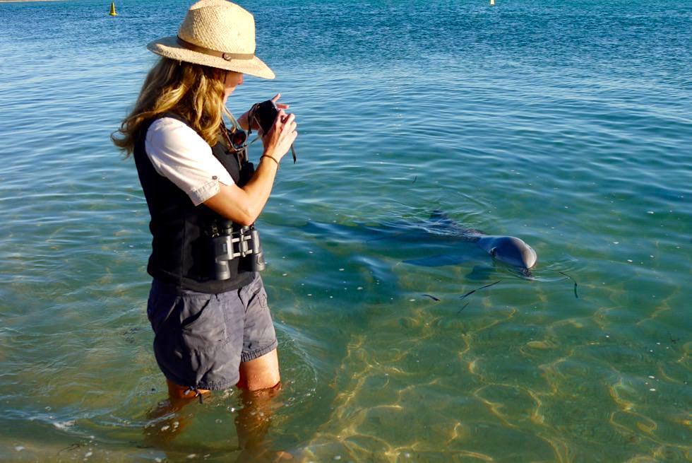 Shark Bay - Monkey Mia - Delfin-Beobachtungsprogramme & Dokumentation - Denham - Western Australia