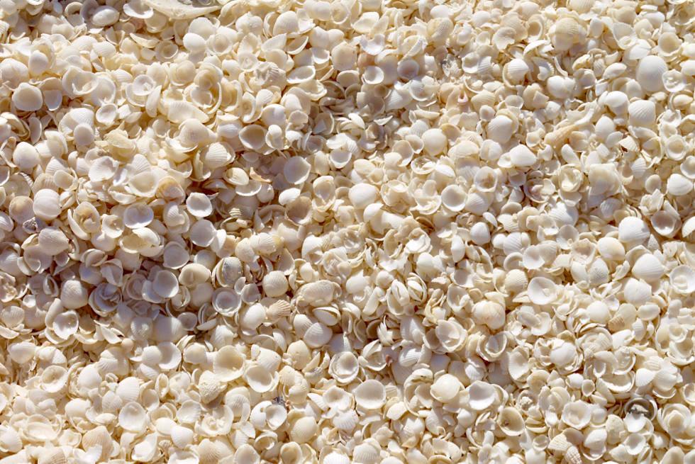 Shark Bay Highlight Shell Beach: statt Sandstrand liegen hier Trillionen Fragum Cockels (Herzmuscheln) - Western Australien
