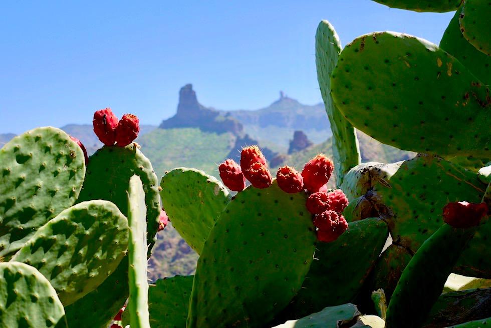 Acusa Seca - Grandioser Ausblick mit blühenden Kakteen - Artenara - Gran Canaria