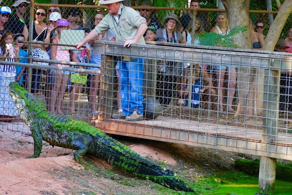 Malcolm Douglas Crocodile Park - Alligator Fütterung - Broome, Kimberley - Western Australia