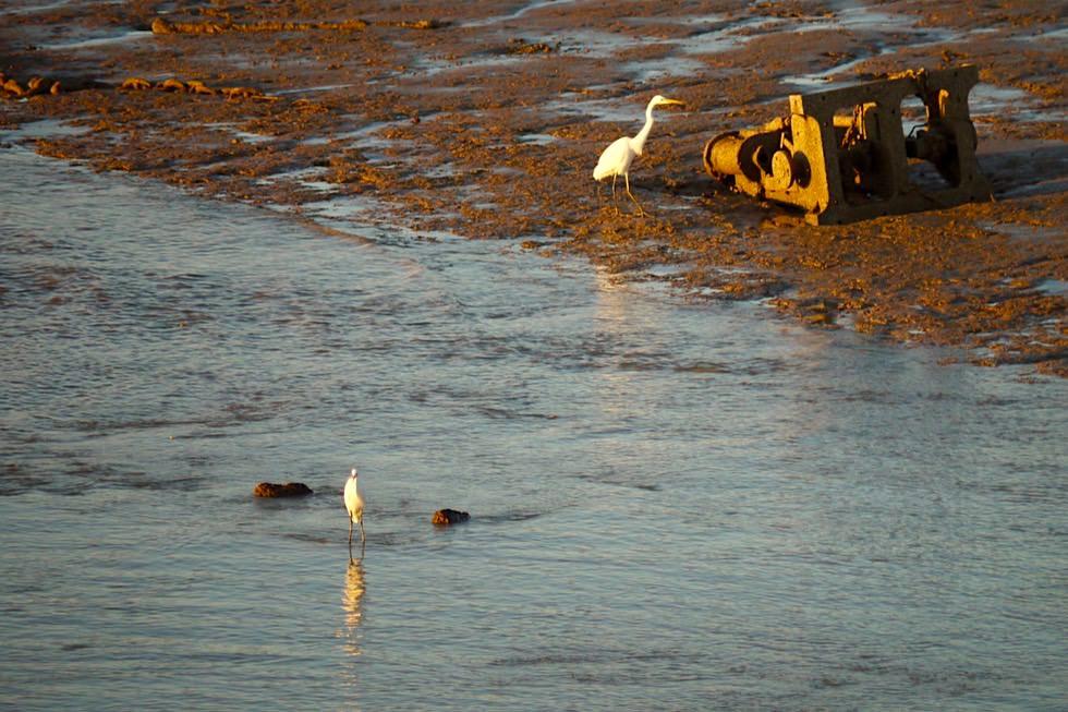 Derby Jetty -Vögel & Dämmerung - Kimberley - Western Australia
