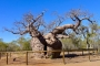 Derby – Boab Trees, Norval Gallery, Aboriginal Kultur & Ort, wo das Meer ausläuft