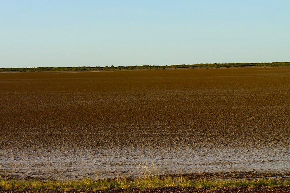Derby - Schwemmlandschaft - Kimberley - Western Australia