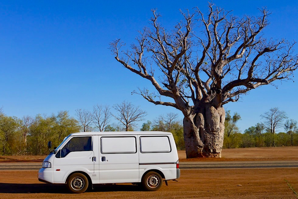 Großer markanter Boab Baum - Derby - Kimberley - Western Australia