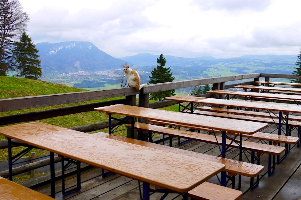 Auf dem Grünten - Alpe Kammeregg - Ausblick im Regen mit Katze - Rettenberg - Bayern