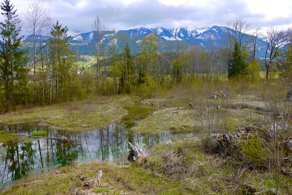 Iller Radweg bei Fischen - Nebenlauf: ein schönes Zuhause für Allgäuer Biber - Bayern