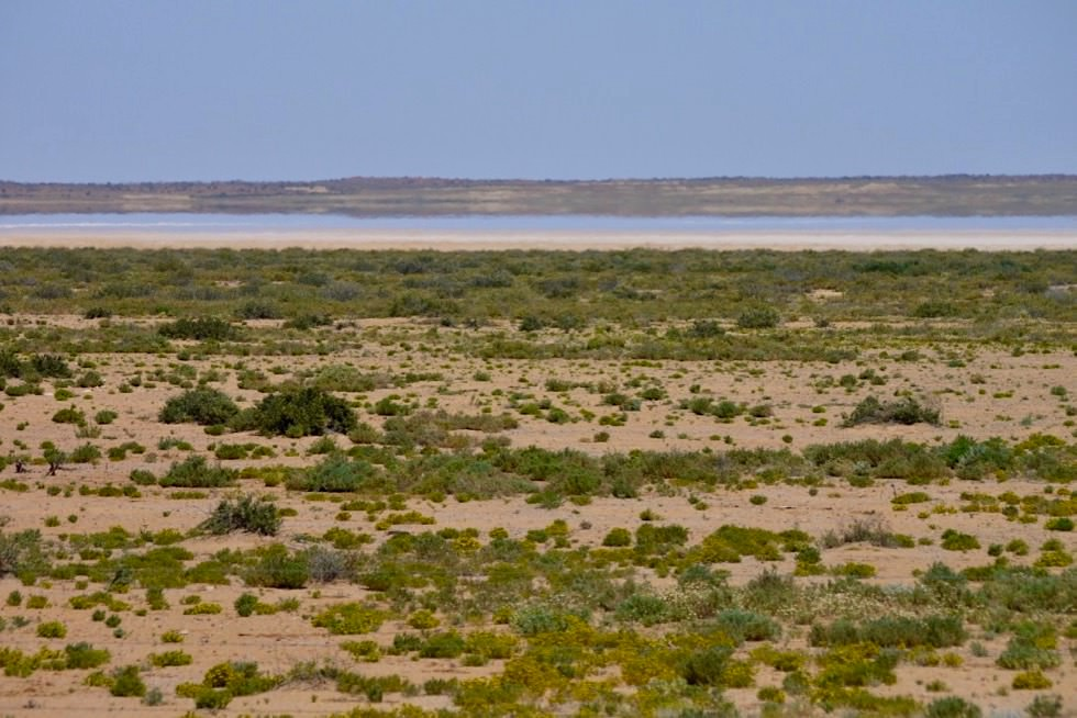 Lake William - Oodnadatta Track - Outback South Australia