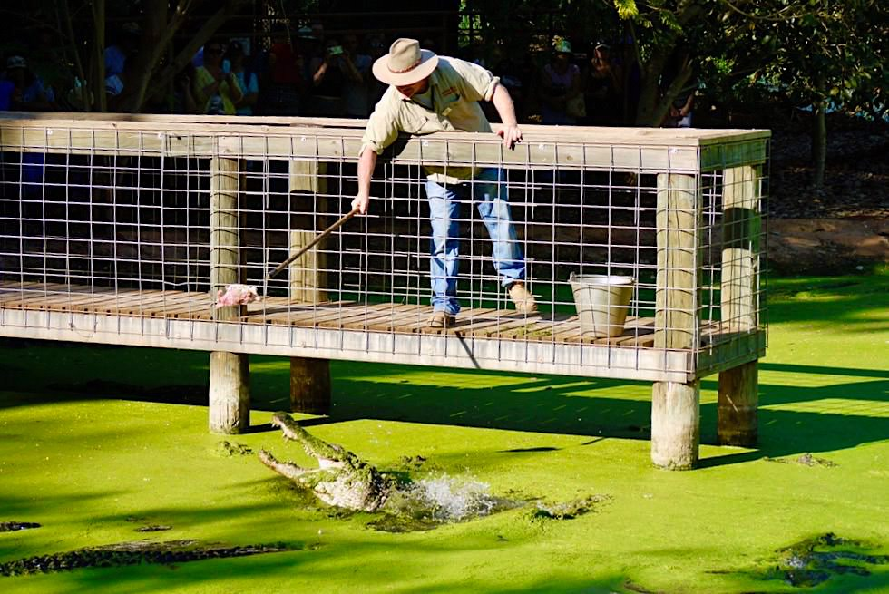 Malcolm Douglas Crocodil Park - Mississippi Alligator - Broome, Kimberley - Western Australia