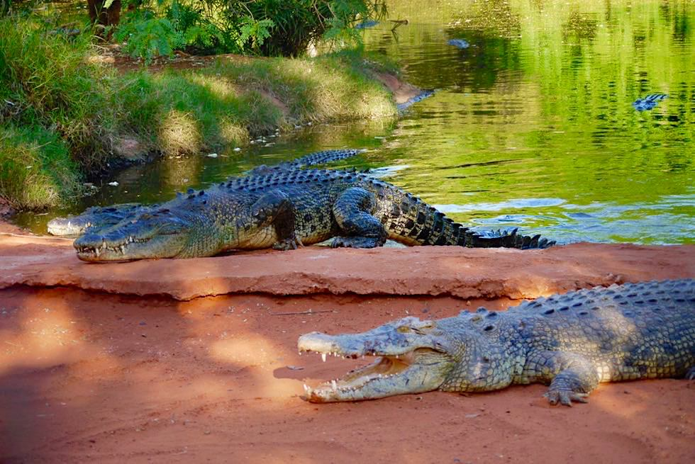 Malcolm Douglas Crocodile Park bei Broome - Salzwasserkrokodile - Kimberley - Western Australia