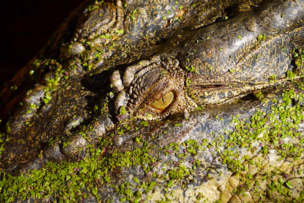 Malcolm Douglas Krokodilpark bei Broome - Auge eines Salzwasserkrokodils (Leistenkrokodils) - Kimberley - Western Australia