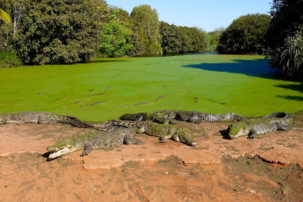 Malcom Douglas Crocodile Park bei Broome - großes Freigehege für Salties - Kimberley - Western Australia