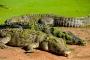 Malcolm Douglas Crocodile Park: Ein Heim für geächtete Salzwasserkrokodile