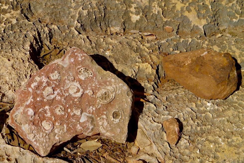 Mimbi Caves - Fossilienfunde - Kimberley - Western Australia
