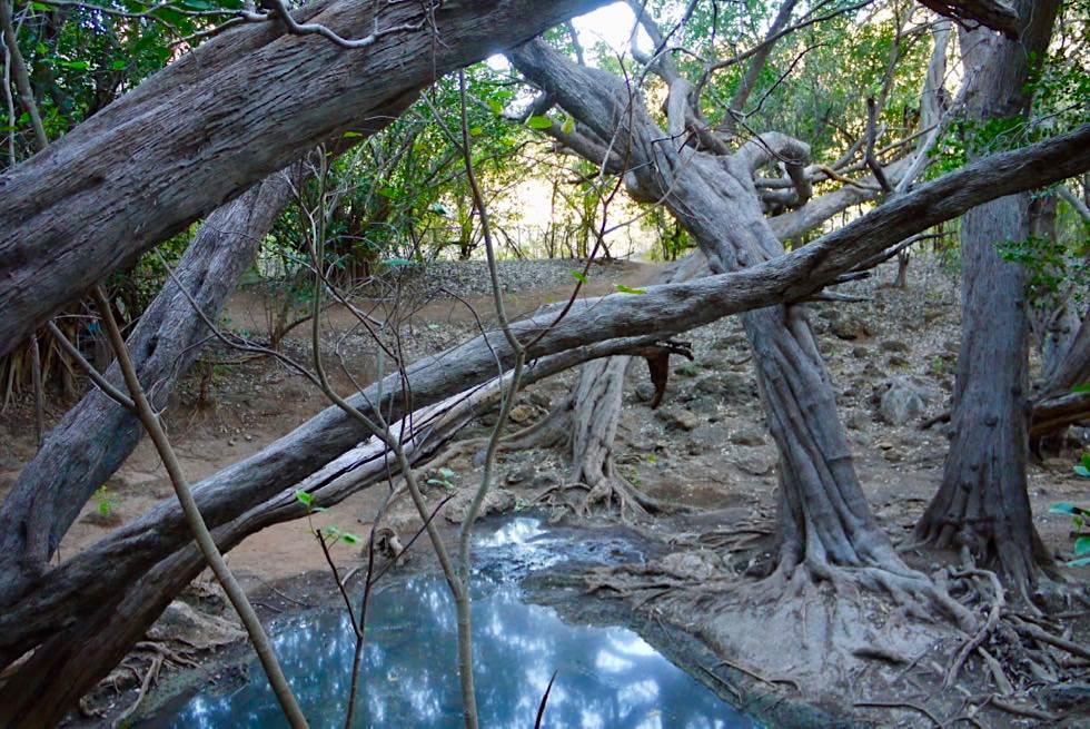 Mimbi Caves Aboriginal Tour - Wasserloch von Geister bewohnt - Kimberley - Western Australia