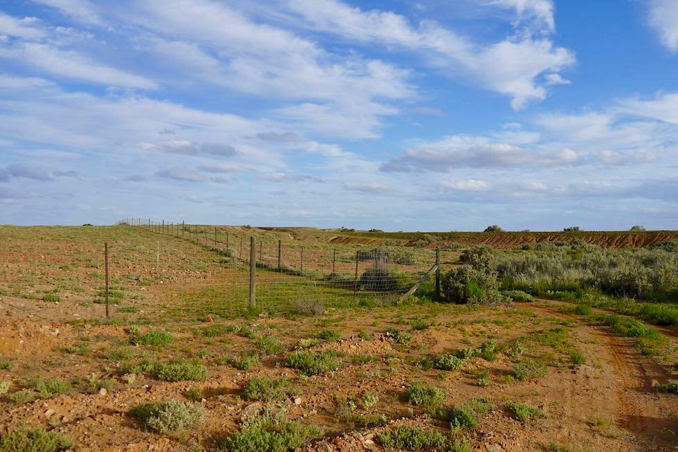 Oodnadatta Track - Dog Fence oder Dingozaun: das längste zusammenhängende Bauwerk der Welt - Outback South Australia